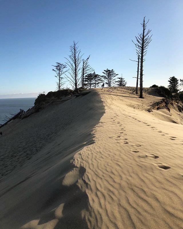 Insane and beautiful sand dunes in the Oregon coast. . . . #sand #desert #dunes #oregonexplored #pnwonderland #pnw #oregon #coast #adventure