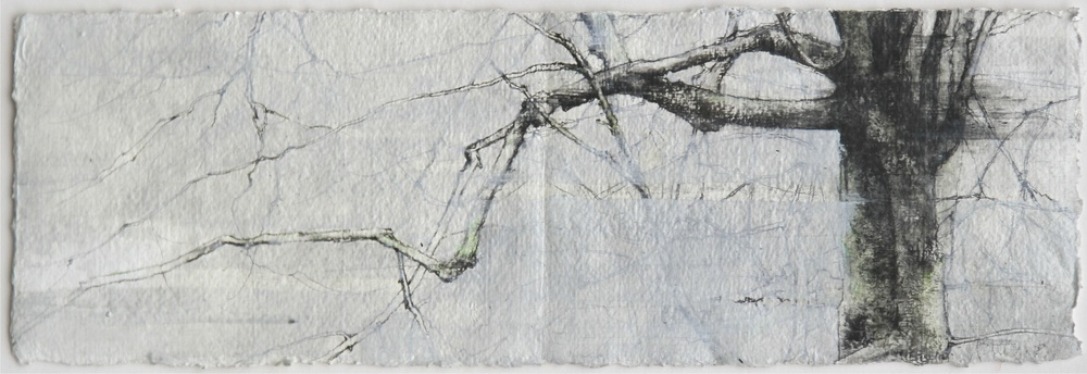 Laurie Steen   RWA Portrait of a Beech - Drawing 03 - 09 15 x 45 cm graphite & oil on gesso paper  S O L D