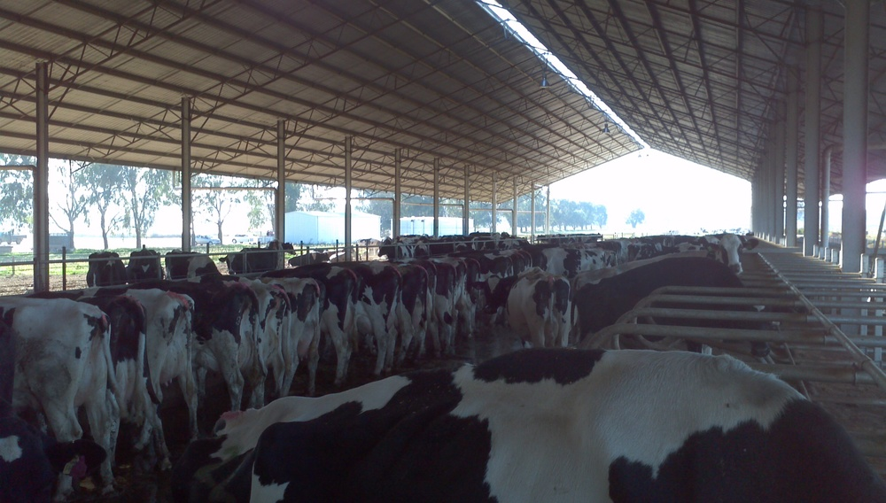 dairy farm management solutions