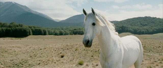 Shadowfax from the Lord of the Rings Trilogy.