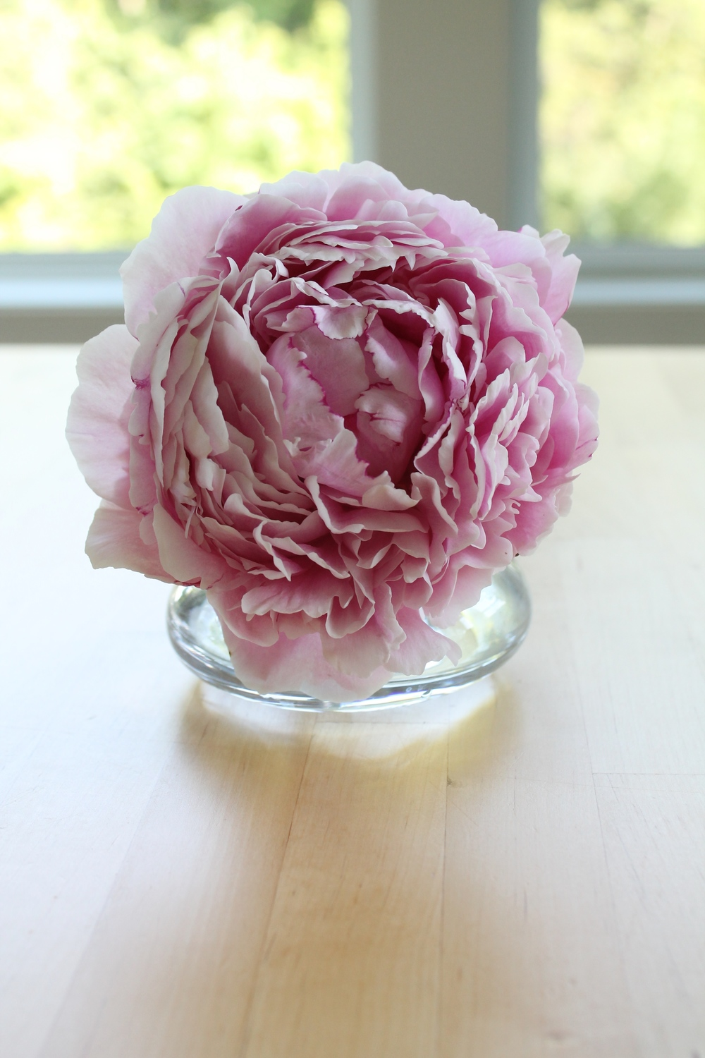 Peony in a bud vase. So pretty!