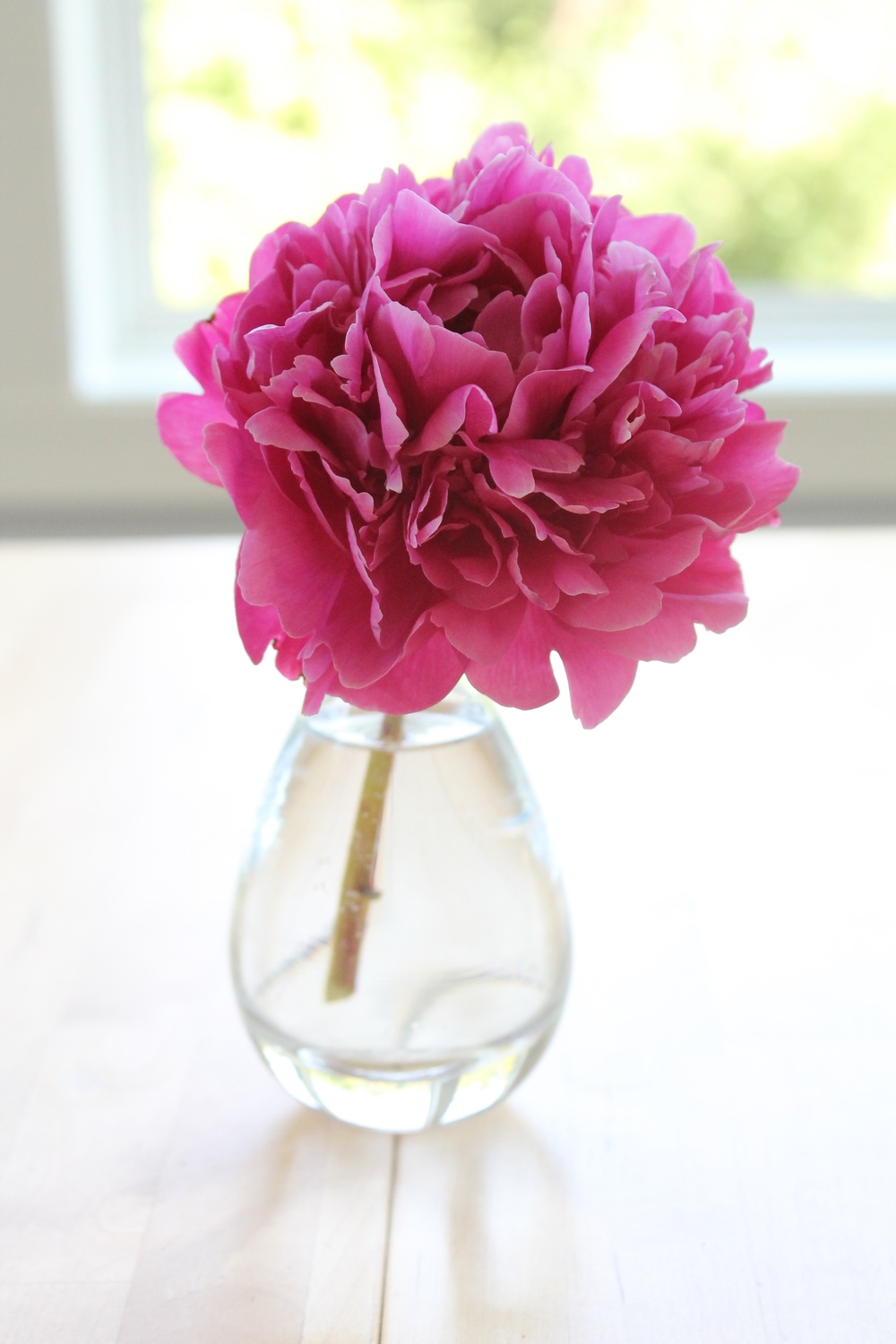 Single peony in a bud vase.