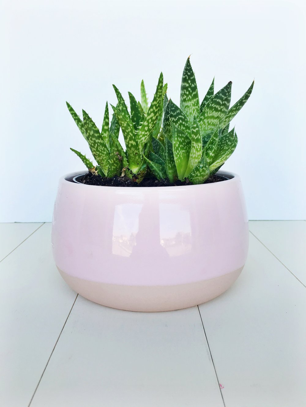 Pretty little plant from Ikea with a pink pot