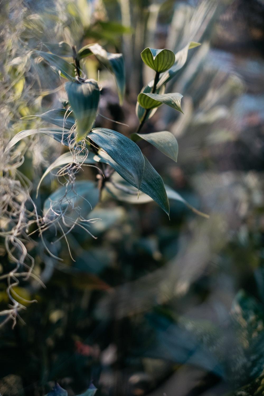 ellamackphotos_Cynthia_plants.jpg