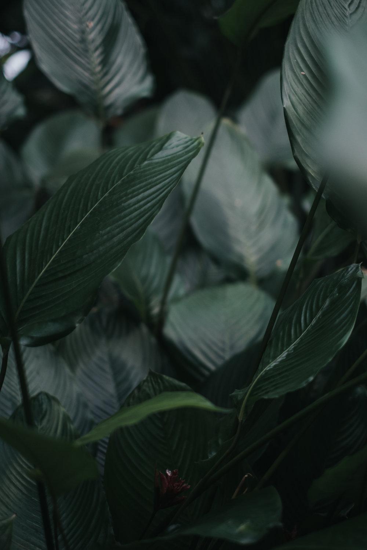 ellamackphotos_Cynthia_plants-4.jpg