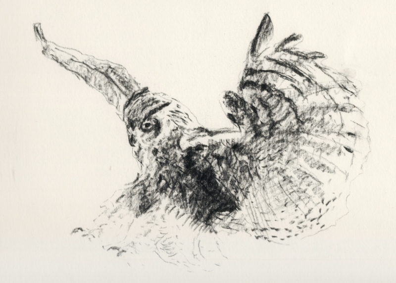 """Owl in Flight"" (2015)"