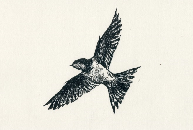 """Swallow"" (Ink on Paper, 2015)"