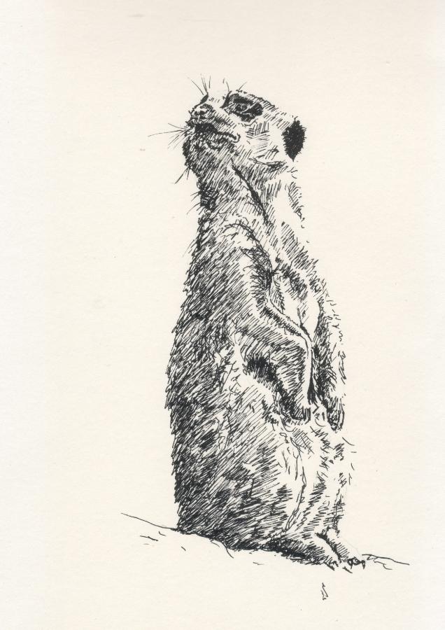 """""""Meerkat"""" (2015)"""