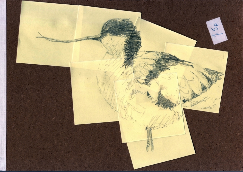 """Post-it Avocet Sketch: mounted on Grandpa's old Sketch-pad"" (2015)"