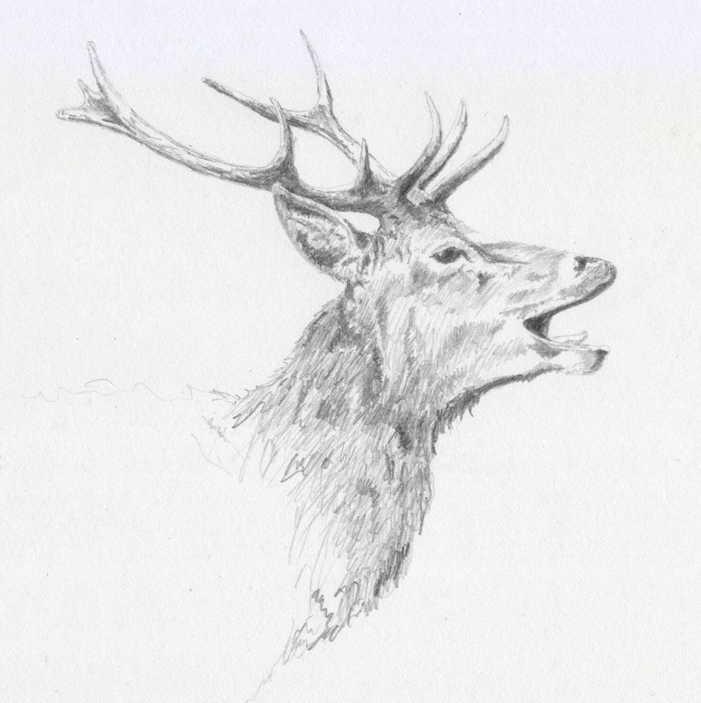 """Second study of Richmond Deer"" (2015)"