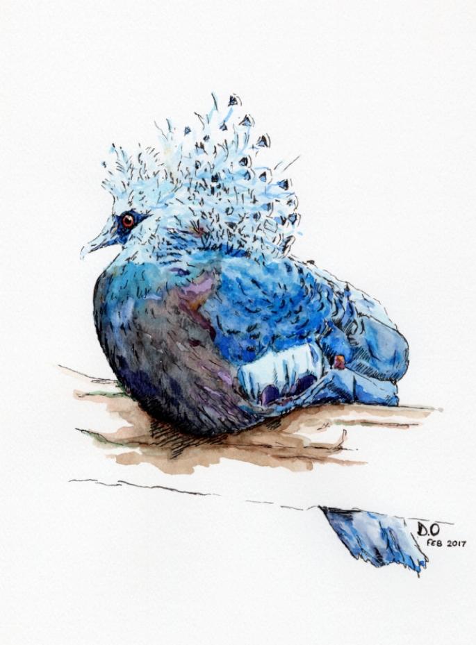 """""""Victoria Crowned Pigeon"""" (2016)"""