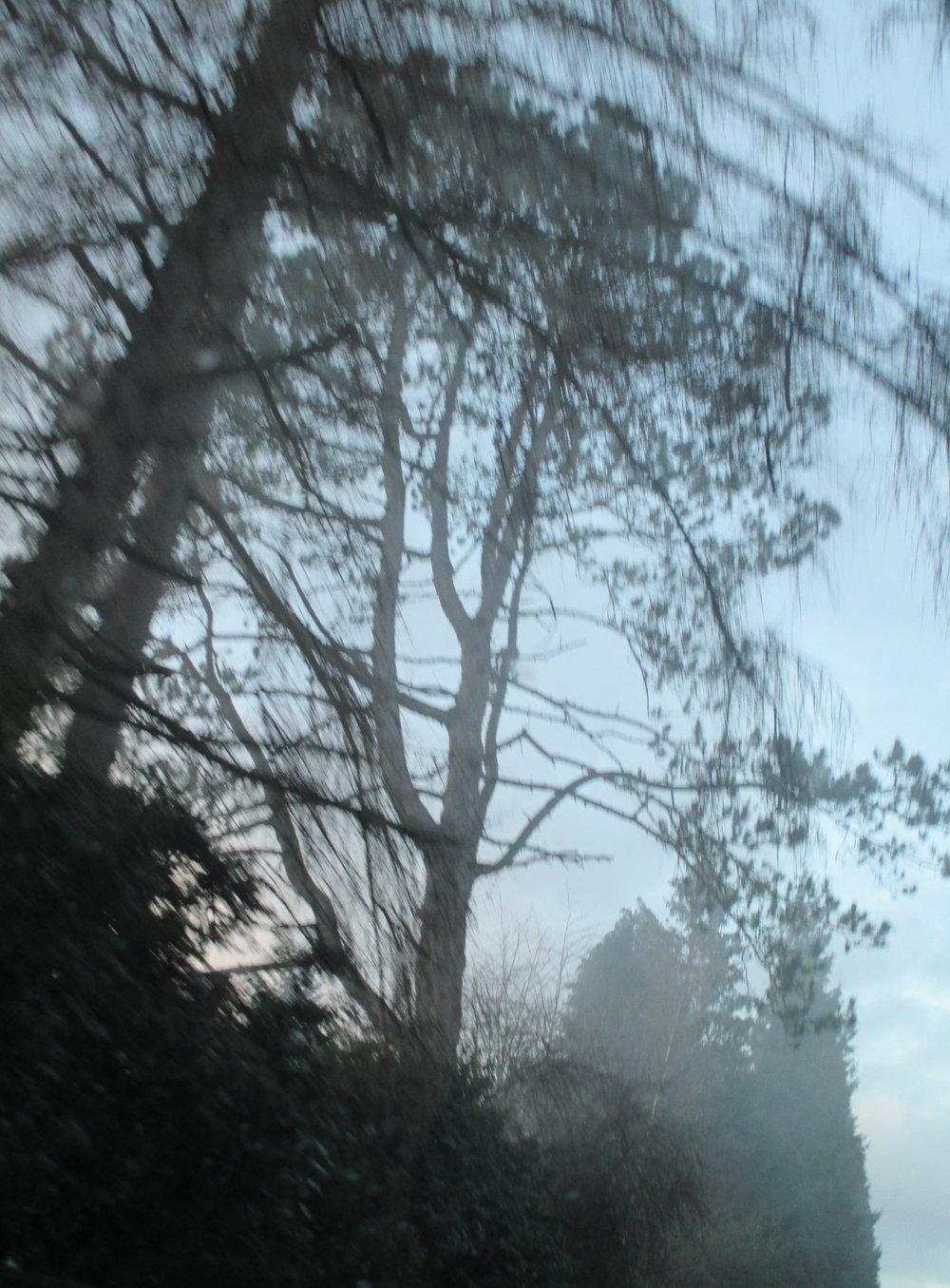 trees 3 photo.JPG