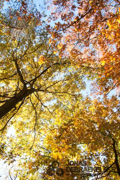 2010 okt 31 - 16u 27min 12s.jpg