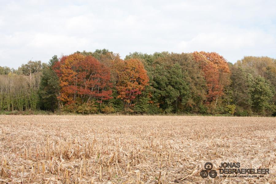 2011 okt 29 - 13u 14min 50s.jpg