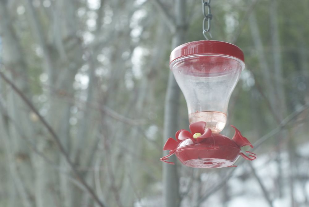 hummingbird feeder 2