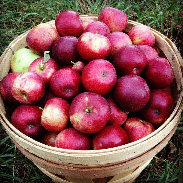 de(tales) apple pie