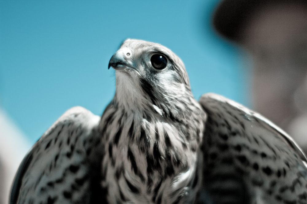 de(tales): hawk