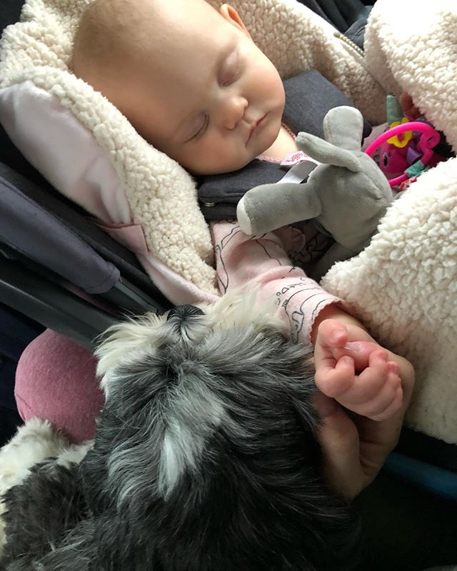 There are moments in life that will take your breath away & make you cry. This is one of those moments. Me holding Lily's hand, with @luckylippai on my lap & his head rests on her car seat looking in. 😭😭😭 _ I wished & prayed for a dog just like Lucky... small, hilarious, big cuddle bug but also lots of energy & fearless. I wished & prayed for a healthy baby. Then when I got pregnant I wished& prayed for them to love each other.  _ Little moments when you get what you wish & pray for... stop & look around. Your just 1 wish or prayer away from it. Don't stop wishing, dreaming, praying - you'll get it when the time is right 😘💛🌈