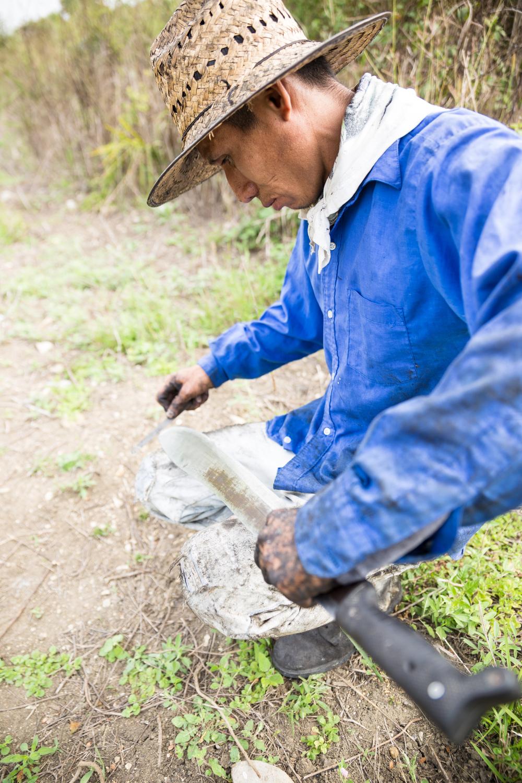 Para tumbar la caña, se requiere una gran mano de obra y como si fuera una prolongación más de sus brazos, el machete se ha convertido en la herramienta principal y todo un símbolo del trabajo de los cañeros.