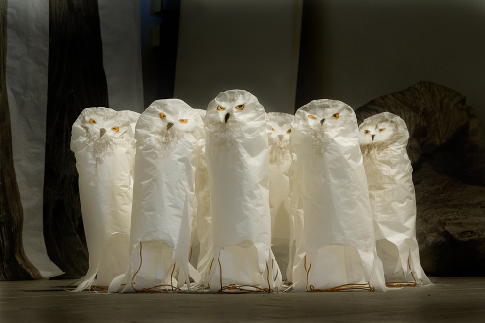 48-kala-show-owls-detail.jpg