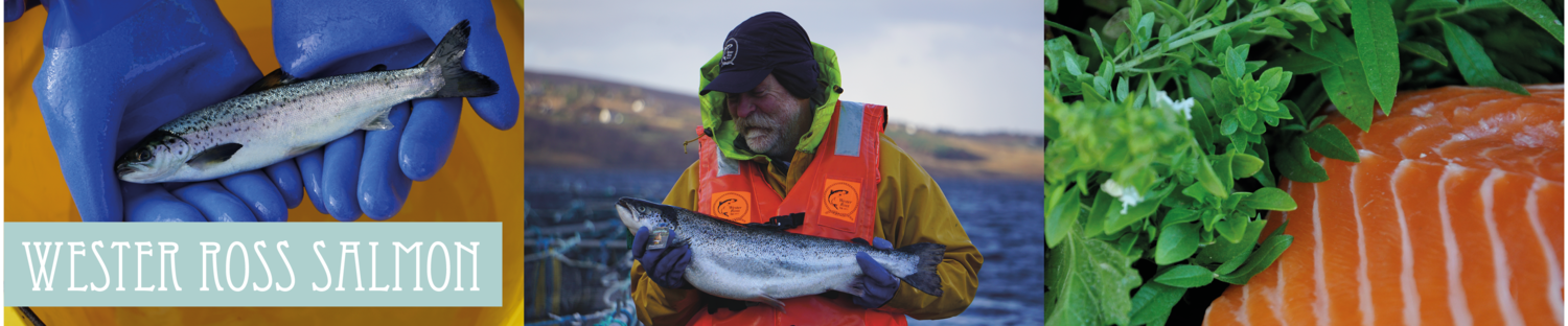 WESTER ROSS SALMON - hand rearing premium sustainable Scottish salmon since 1977