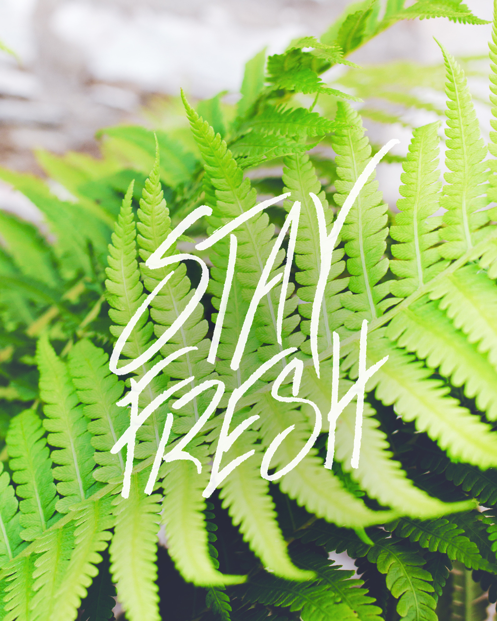Stay Fresh   Personal lettering project.  (Find the original post here).