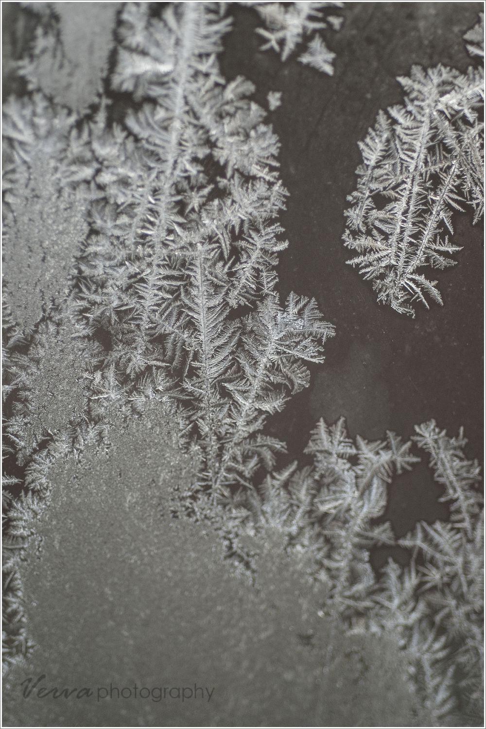 macro lens frost