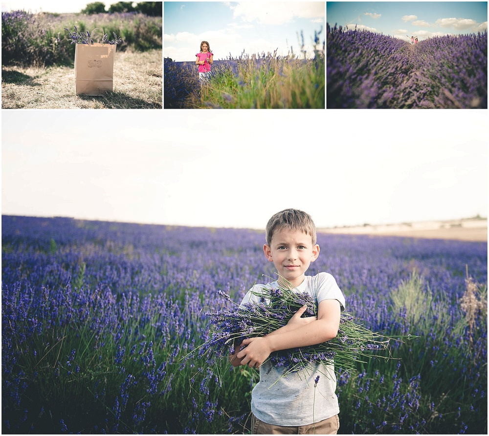 verva photography. lavender fields