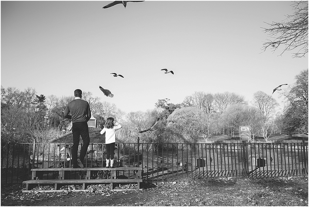 feeding the birds. rye town park