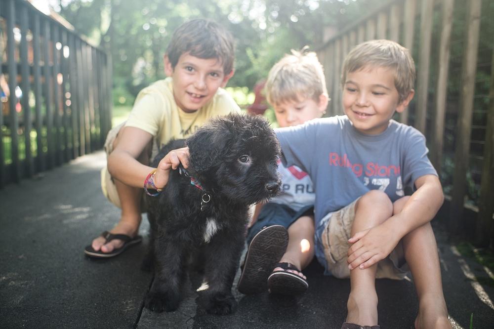 new puppy! harrison, ny