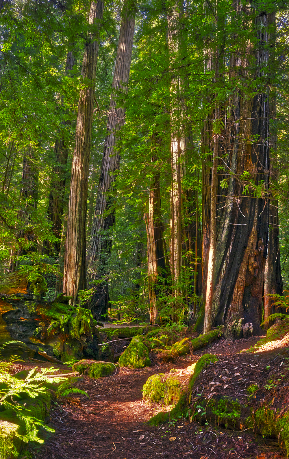 Montgomery Woods State Park
