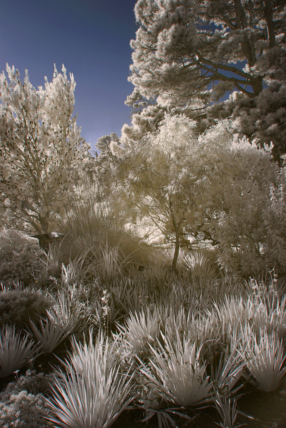 Blue Sky Infrared, Mendocino Coast, California