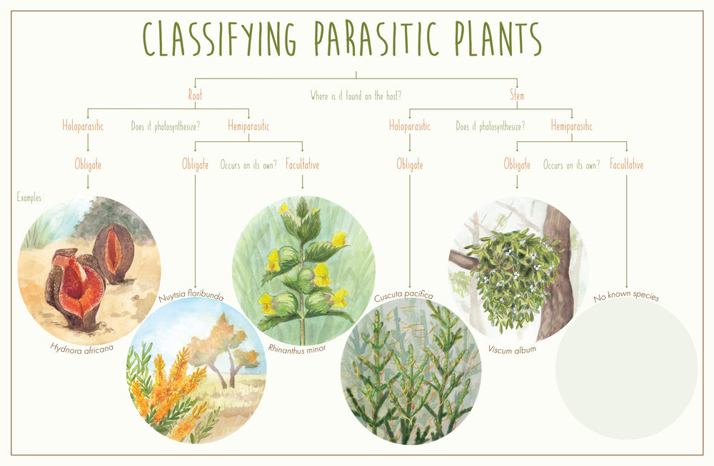 Classifying Parasitic Plants