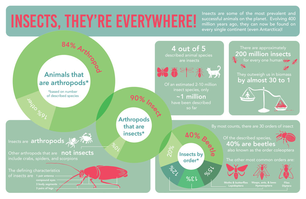 Insect Infographic