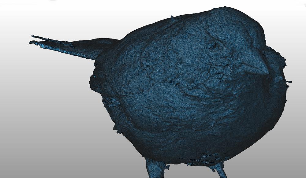 Blue Sparrow