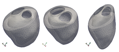 3D meshes generated from high resolution morphological scans -- these will serve as the gold standard for this project