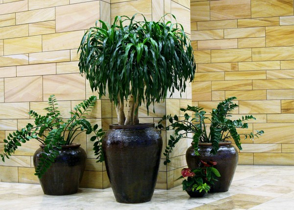 Roswell Interior Plants
