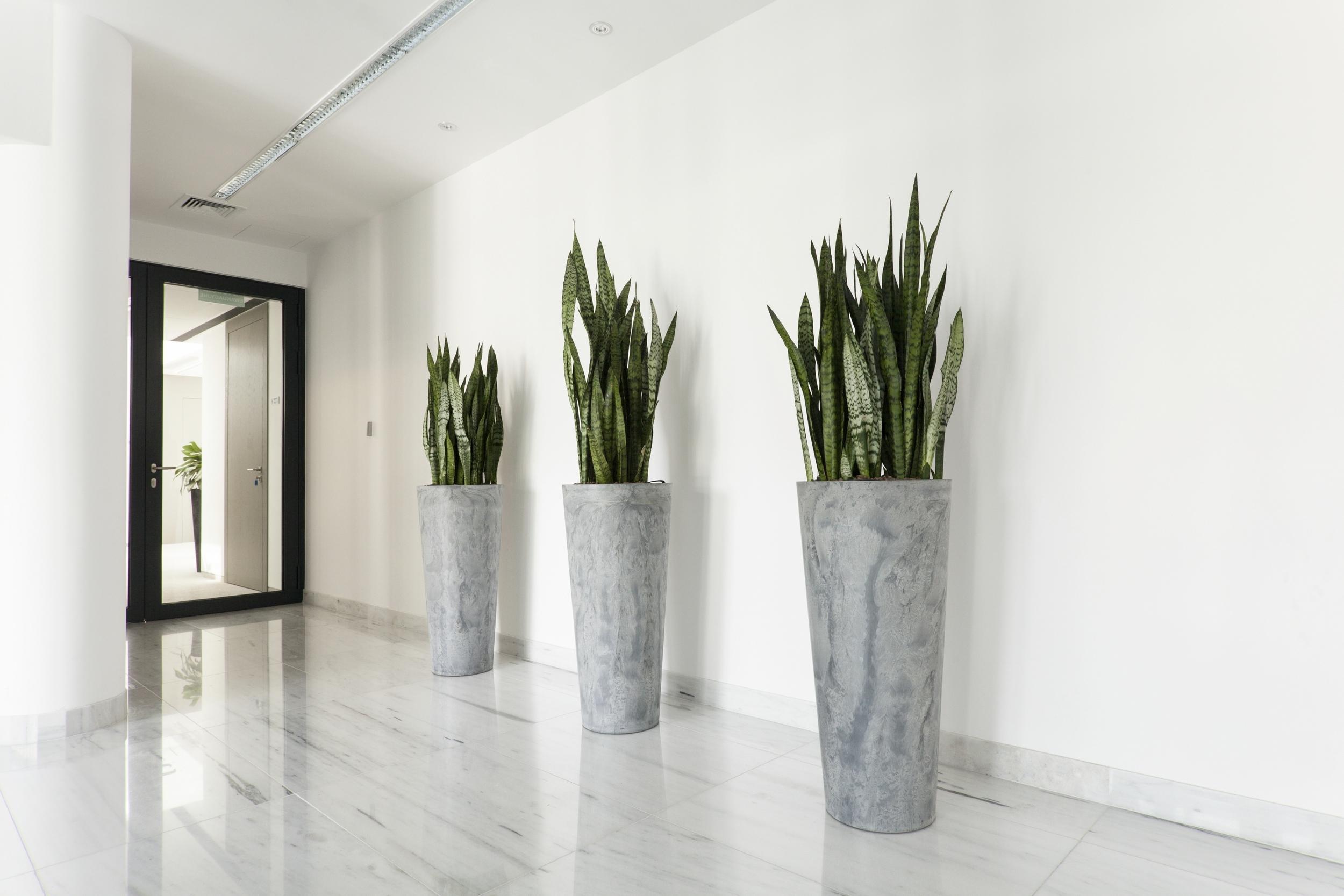 Roswell Interior Plants