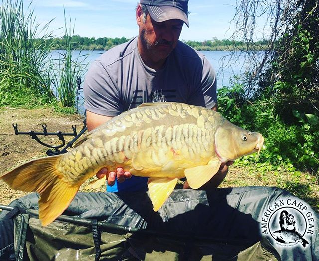 ACG Field Tester Pieter Oberholzer with a beautiful mirror!  #americancarpgear #acg #carp #kraken #carpfishing #us #carppro #sick #carpwars  #totalcarp #madeintheusa  #fish #fishing #carpangler #bigfish #monsterbait  #outdoorsman  #outdoor #bestbait #karpe  #carplife #mirrorcarp #texas #usa #america #oncarp  #fishinglife #flyfishing #fishingislife