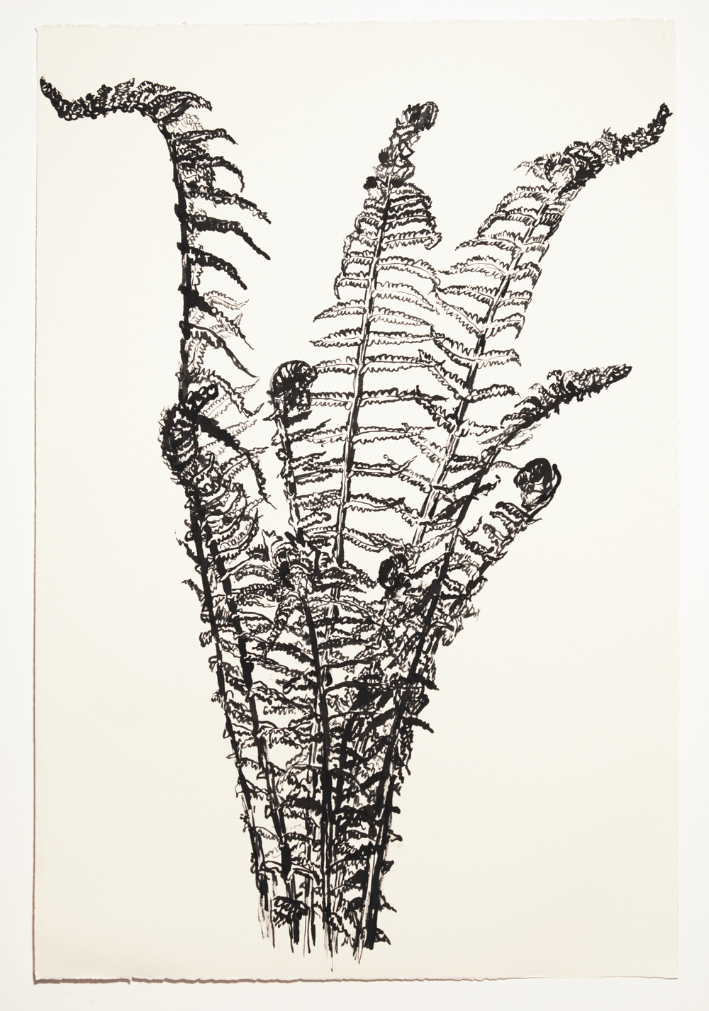 FERNS RISING, 2015