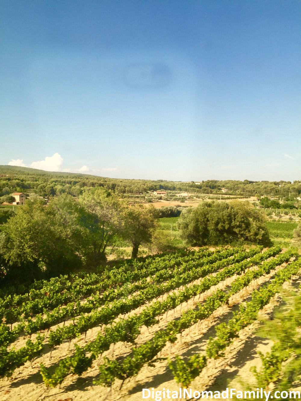 Vineyard view from the train windows
