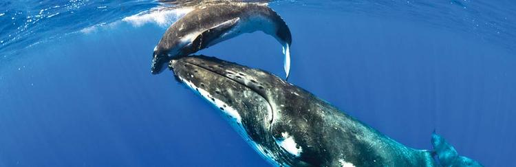 niue_whalesjpg - Images Of Whales