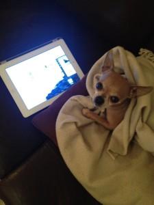 The Tiniest Thai Rachel Walder Tiniest Dog