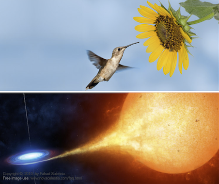 The high energy nectarivore humming bird feeds on energy stored in sunflowers.  The high energy extraterrestrial stellivore civilization feeds on energy stored in stars. True or false?