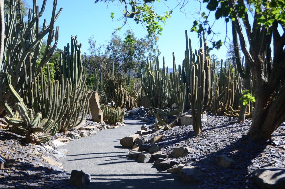 Ganna Walska Lotusland Cactus Garden