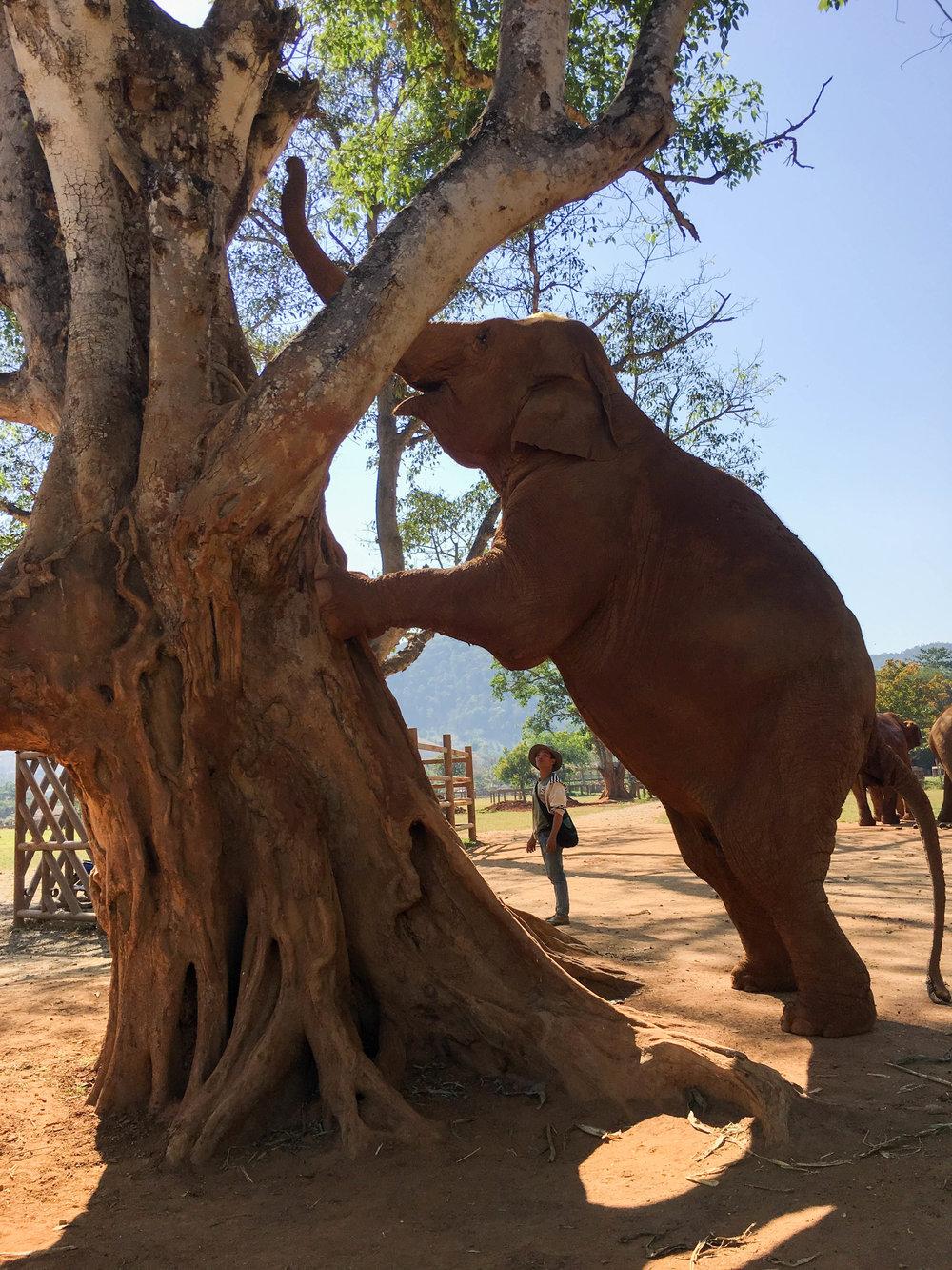 elephant nature park 1.jpg