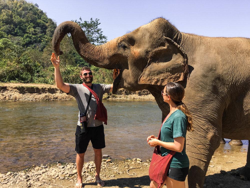 chiang mai elephant nature park.jpg