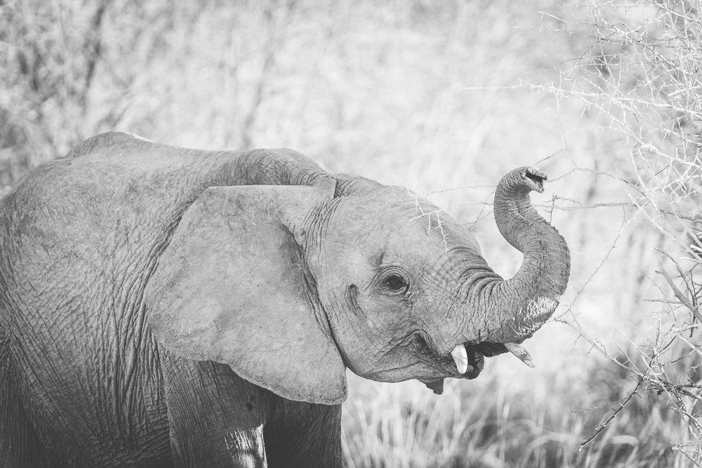Namibiablog-23.jpg