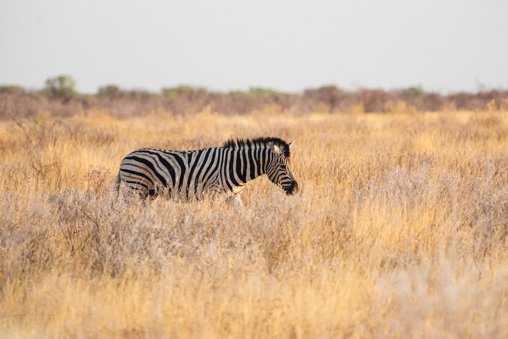 Namibiablog-26.jpg