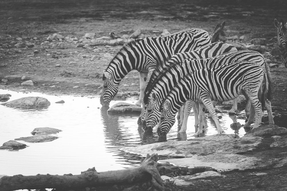Namibiablog-27.jpg